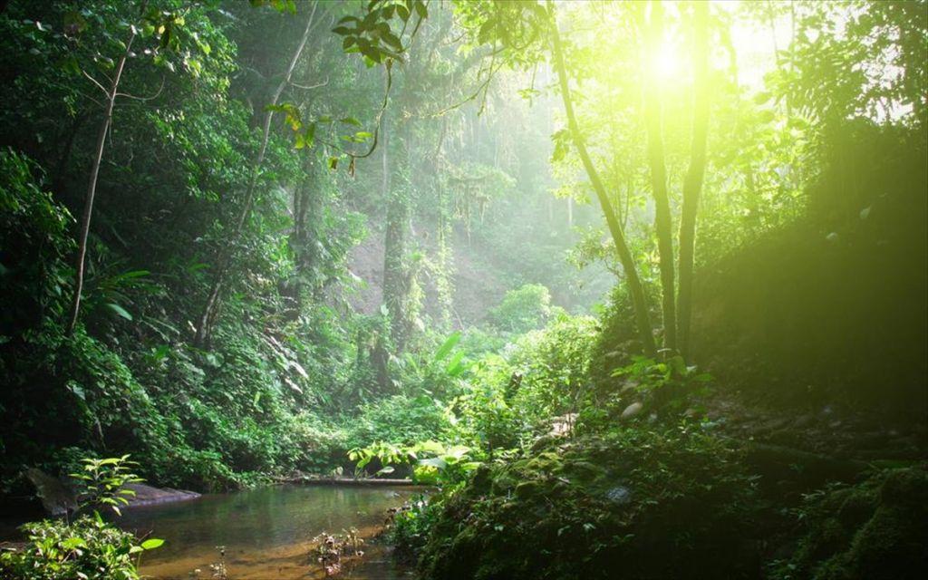 Ο Αμαζόνιος στα πρόθυρα ασφυξίας