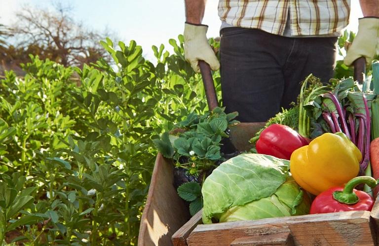 Εμπόριο και Αγροδιατροφή: Ευκαιρίες συνεργειών και ανάπτυξης