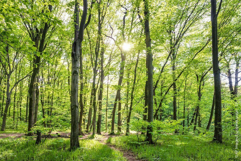 Κλίμα: Νέα ευρωπαϊκή στρατηγική για τα δάση ενέκρινε η Κομισιόν