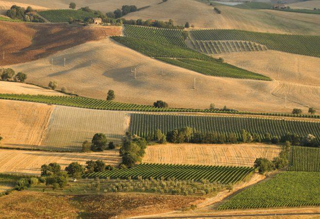 Κέντρο ικανοτήτων για την ευφυή γεωργία και τις νέες τεχνολογίες