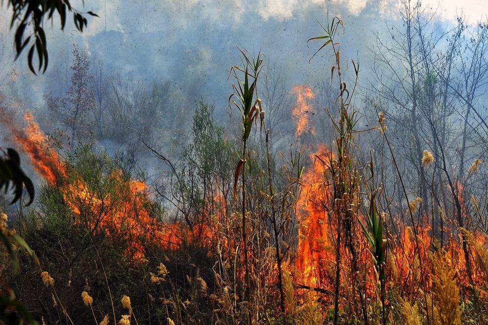 Πυρκαγιά στη Ρόδο – Επιχειρούν και εναέρια μέσα