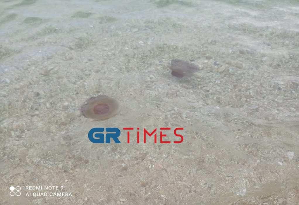 Χαλκιδική – Κοπάδι από μέδουσες σε παραλία στην Ολυμπιάδα