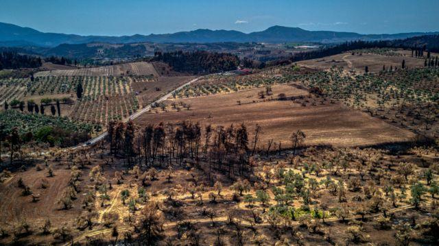 Φωτιές – Απαλλάσσονται από τον ΕΝΦΙΑ και τα αγροτεμάχια που καταστράφηκαν από τις πυρκαγιές