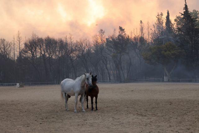 Φωτιά στη Βαρυμπόμπη – Τεράστια κινητοποίηση για τη διάσωση των ζώων