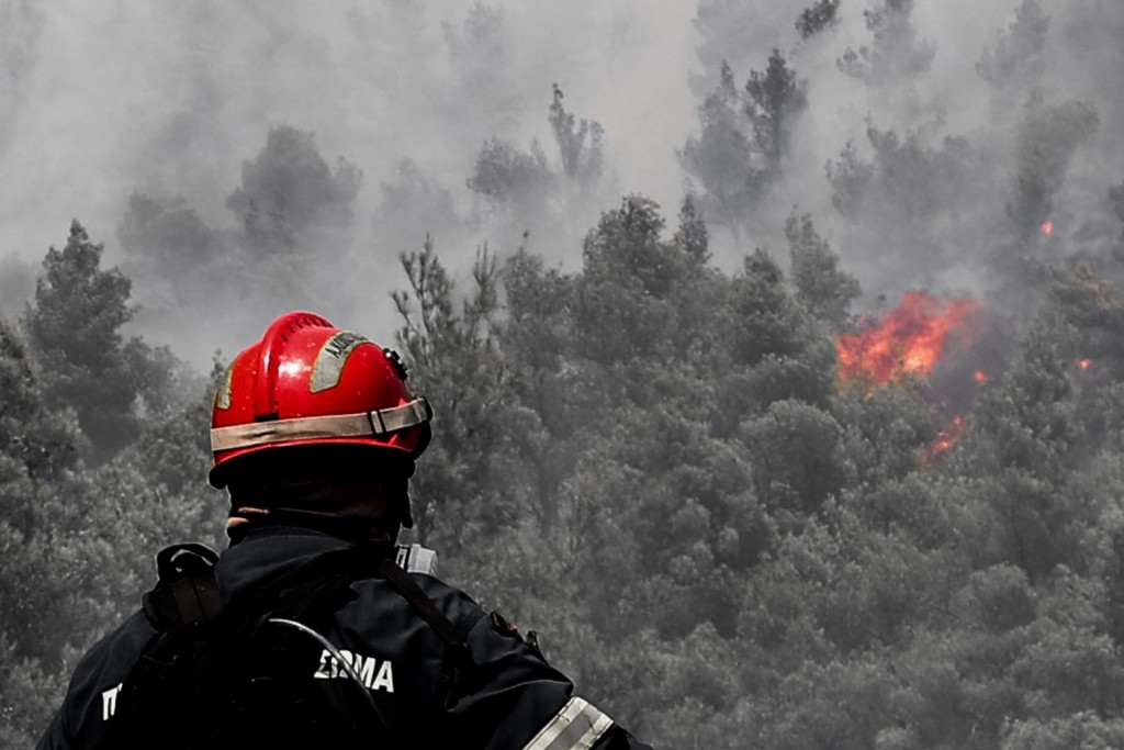 Politicians, burnt forests, and the need for consensus on a national reconstruction