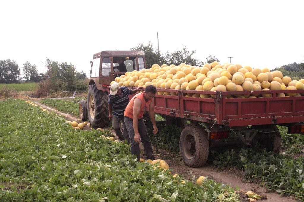 Καύσωνας – Προσοχή στους εργαζόμενους του πρωτογενή τομέα συνιστά το υπουργείο Αγροτικής Ανάπτυξης