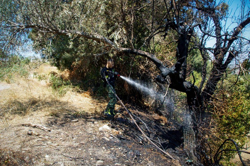 Ρόδος – Κλιμάκιο του ΕΛΓΑ καταγράφει τις ζημιές από τις πυρκαγιές – Περιπολίες σε δασικές εκτάσεις