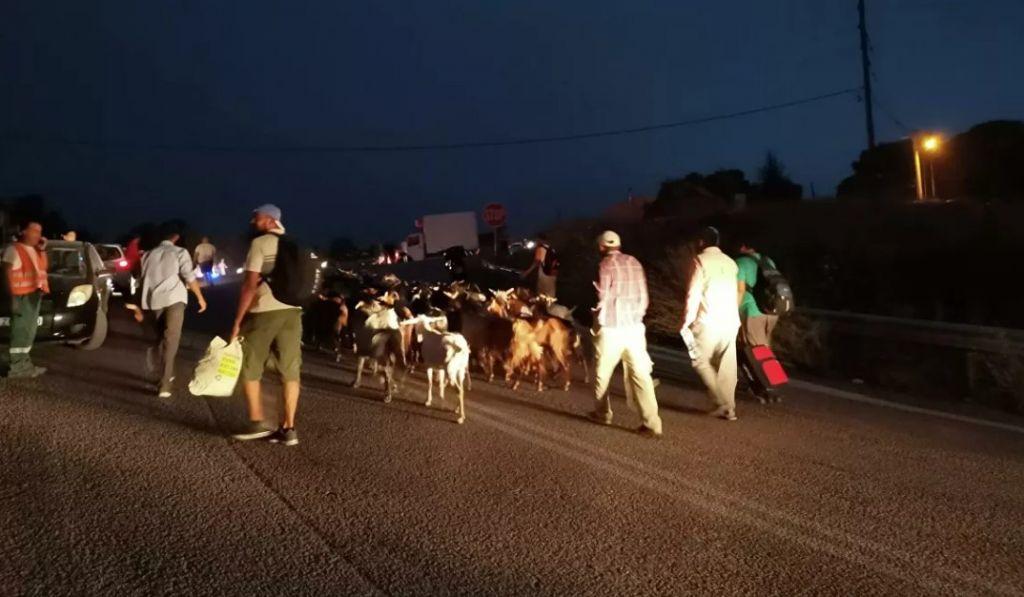 Συγκλονιστικές εικόνες από τις Αφίδνες – Κάτοικοι φεύγουν να σωθούν με βαλίτσες και τα ζώα τους