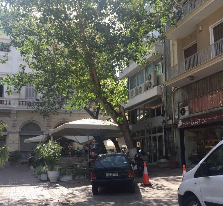Αθήνα – Το δέντρο που «τρομοκράτησε» Πάιατ και Μενέντεζ – Νέες φωτογραφίες από την ώρα της πτώσης