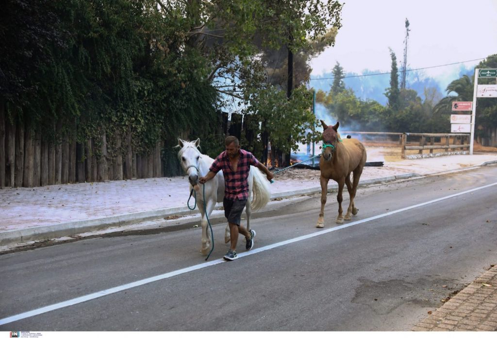 Εκκενώθηκαν όλοι οι ιππικοί όμιλοι στην Βαρυμπόμπη – Μεταφέρθηκαν ασφαλή όλα τα άλογα