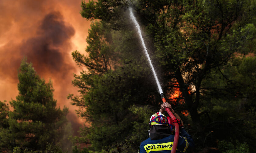 One third of Evia forests burned