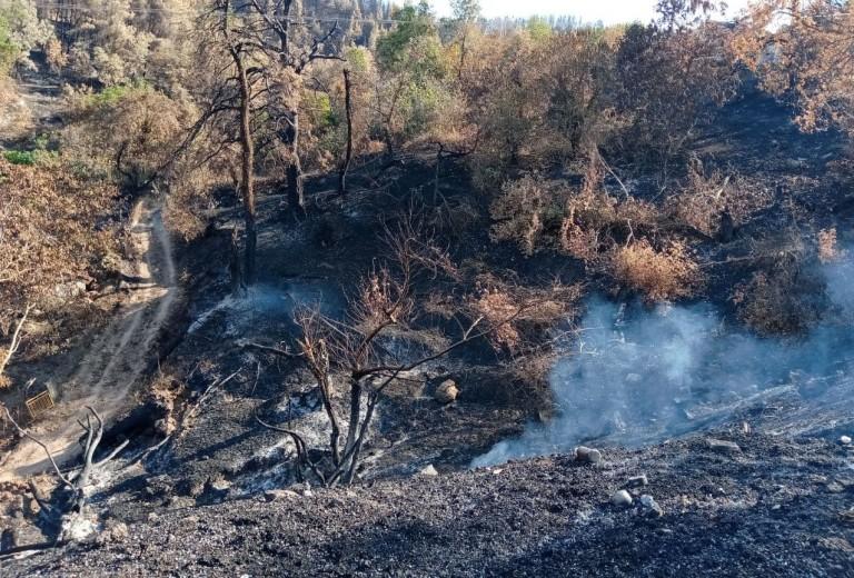 Υπουργείο Περιβάλλοντος – Ενίσχυση 900.000 ευρώ σε δασικούς συνεταιρισμούς και κέντρα περίθαλψης άγριας πανίδας στη Βόρεια Εύβοια
