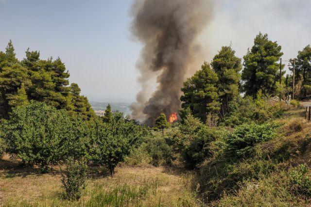 Φθιώτιδα – Φωτιά σε δασική έκταση στο Λογγίτσι – Εντολή εκκένωσης για τον οικισμό