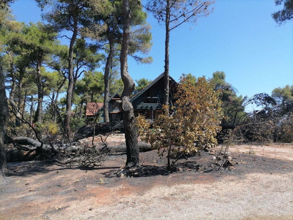 Φωτιά στην Αττική – Το in.gr στην Ιπποκράτειο Πολιτεία – Κρανίου τόπος