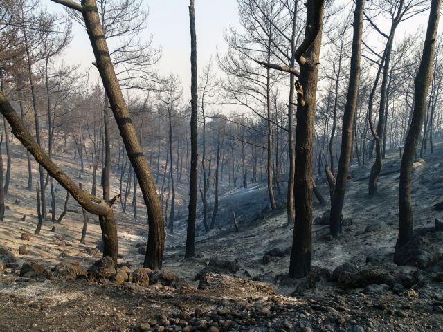 Υπό έλεγχο τέθηκε η φωτιά στη Ρόδο