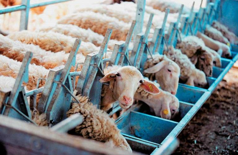 Τι αλλάζει στην παρασκευή ζωοτροφών
