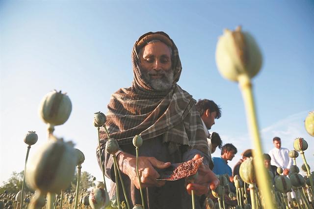 Αφγανιστάν – Χρυσές δουλειές από το λαθρεμπόριο οπίου