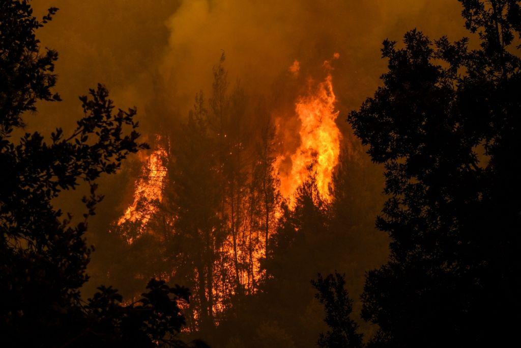 «Σε 10 χρόνια έχει καεί έκταση μεγαλύτερη από το Βέλγιο»