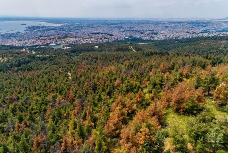 Θεσσαλονίκη – Σε ισχύ μέχρι αύριο η απαγόρευση κυκλοφορίας στο Σέιχ Σου λόγω πολύ υψηλού κινδύνου πυρκαγιάς