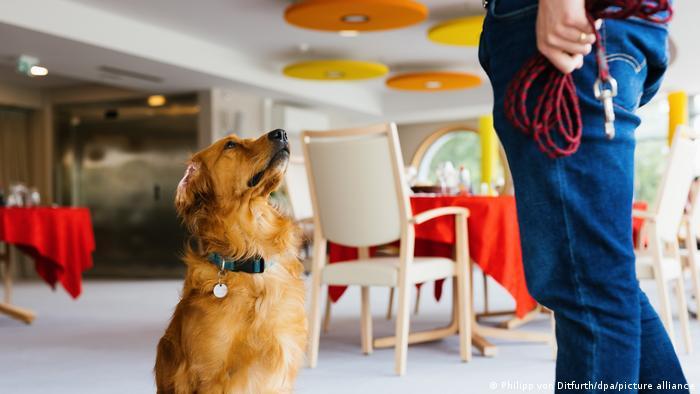 Κοροναϊός – Γηροκομείο χρησιμοποιεί σκύλο αντί για τεστ – Οι μελέτες για τα σκυλιά-οσφρηστές