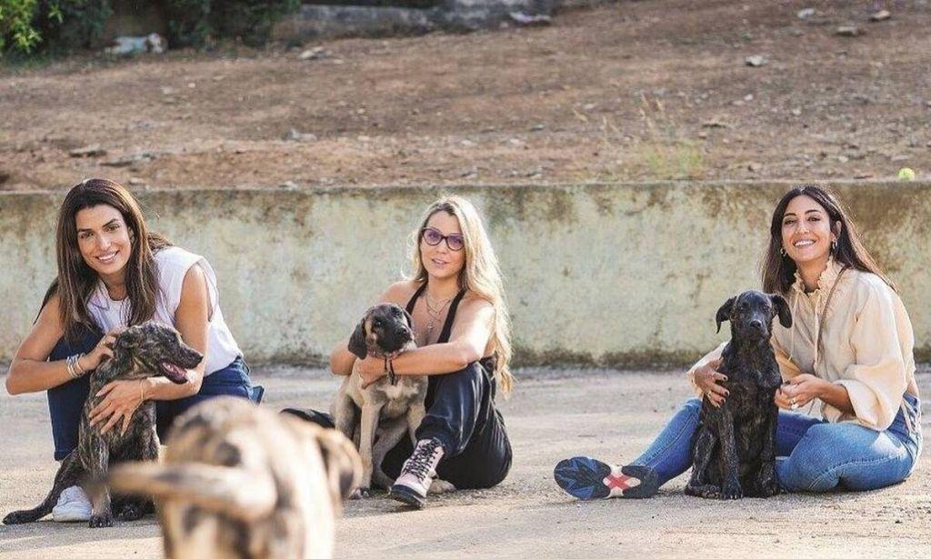 Καταφύγιο ζώων στην Αθήνα ανοίγει τις πόρτες του σε πυρόπληκτα ζώα