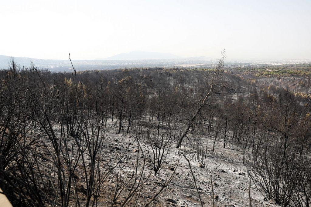 Πυρκαγιές – Τα έσοδα από το νομισματικό πρόγραμμα της Επιτροπής «Ελλάδα 2021» θα πάνε στους πυρόπληκτους