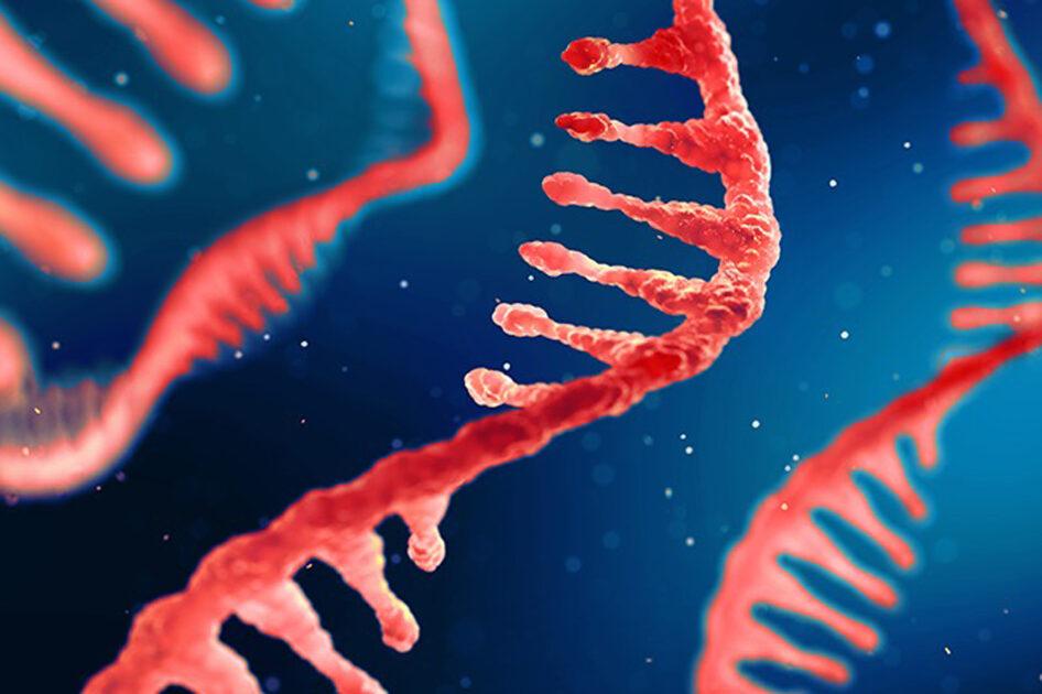 Εμβόλιο – Ενισχυτική δόση με «αυτοαναπαραγόμενο mRNA» υπόσχεται προστασία από πολλά στελέχη