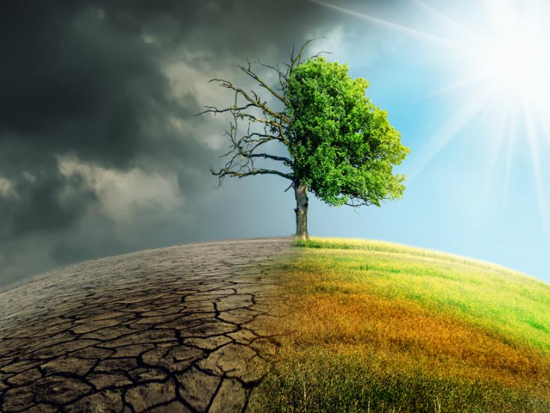 Κλιματική Αλλαγή – Σχεδόν το ένα στα τρία είδη δέντρων κινδυνεύουν με εξαφάνιση