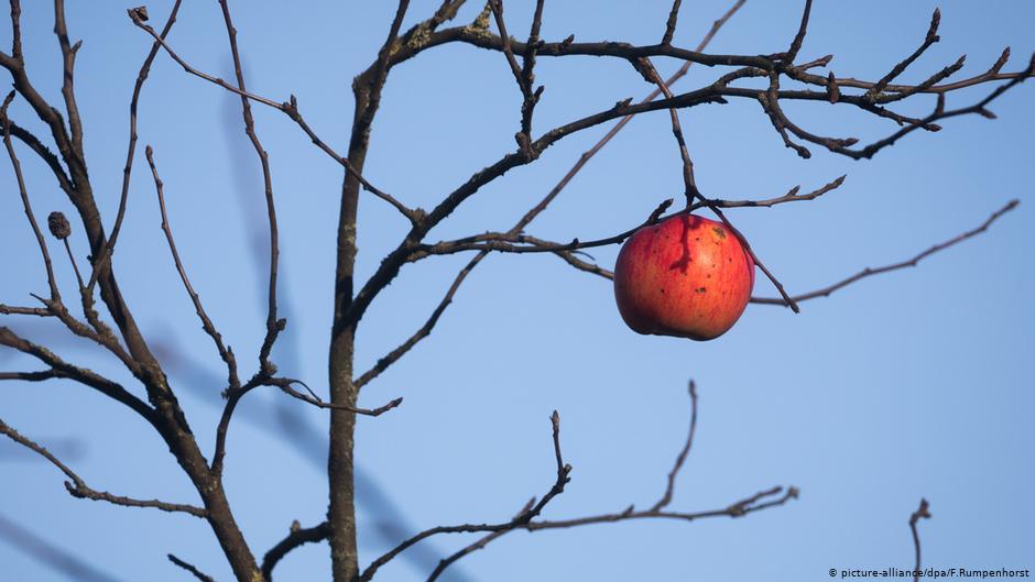 Γερμανία – Αυξήθηκαν οι κλοπές φρούτων κατά την πανδημία