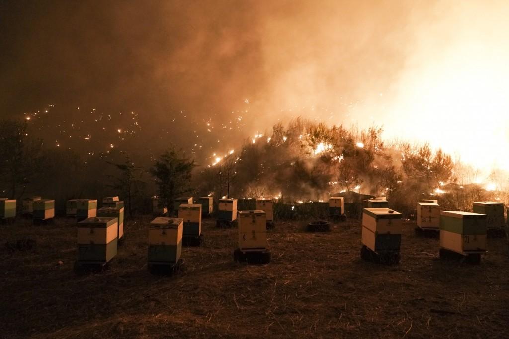 Μελισσοκόμοι – 13 μέτρα στήριξης των πληγένων από τις πυρκαγιές