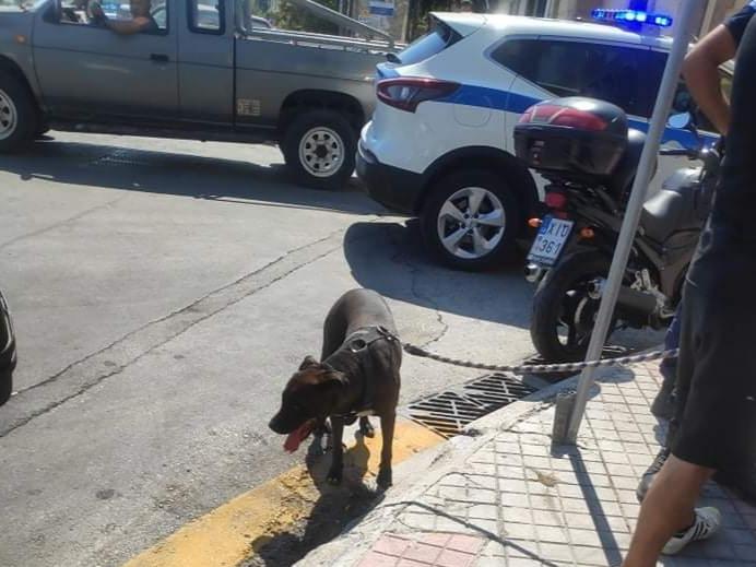 Λέσβος – Κακοποίηση σκύλου μέρα μεσημέρι μπροστά σε ανήλικους και περαστικούς