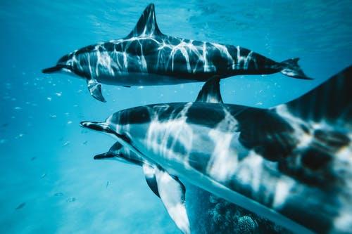 Δελφίνια έσωσαν κολυμβητή αγνοούμενο για 14 ώρες