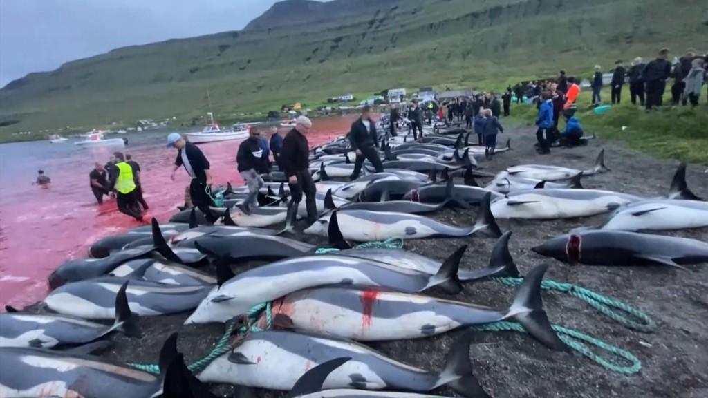 Ματωμένο φιόρδ: Κατακραυγή για τη σφαγή 1.400 δελφινιών στις Φερόες