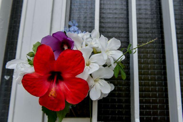 Μίκης Θεοδωράκης – Συγκινητικές στιγμές στο σπίτι του – Τον αποχαιρετούν με ένα λουλούδι στην πόρτα