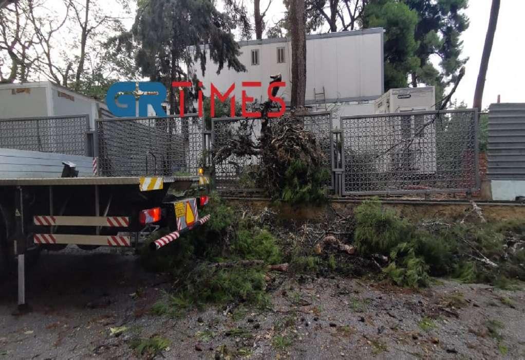 Κακοκαιρία «Αθηνά» – Πτώσεις δέντρων και προβλήματα στην ηλεκτροδότηση σε Θεσσαλονίκη και Κέρκυρα