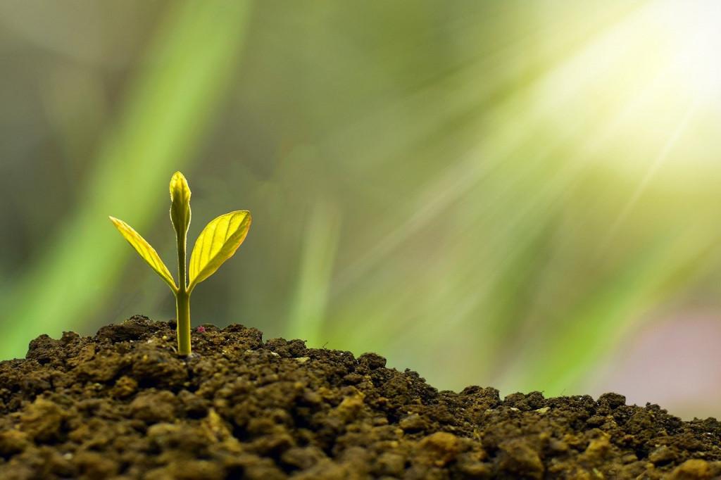 Νέα μέτρα για τον αμπελοοινικό και οπωροκηπευτικό τομέα – Τι περιλαμβάνουν